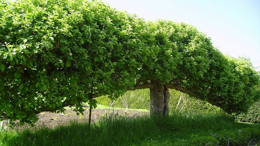 Pruning for productivity